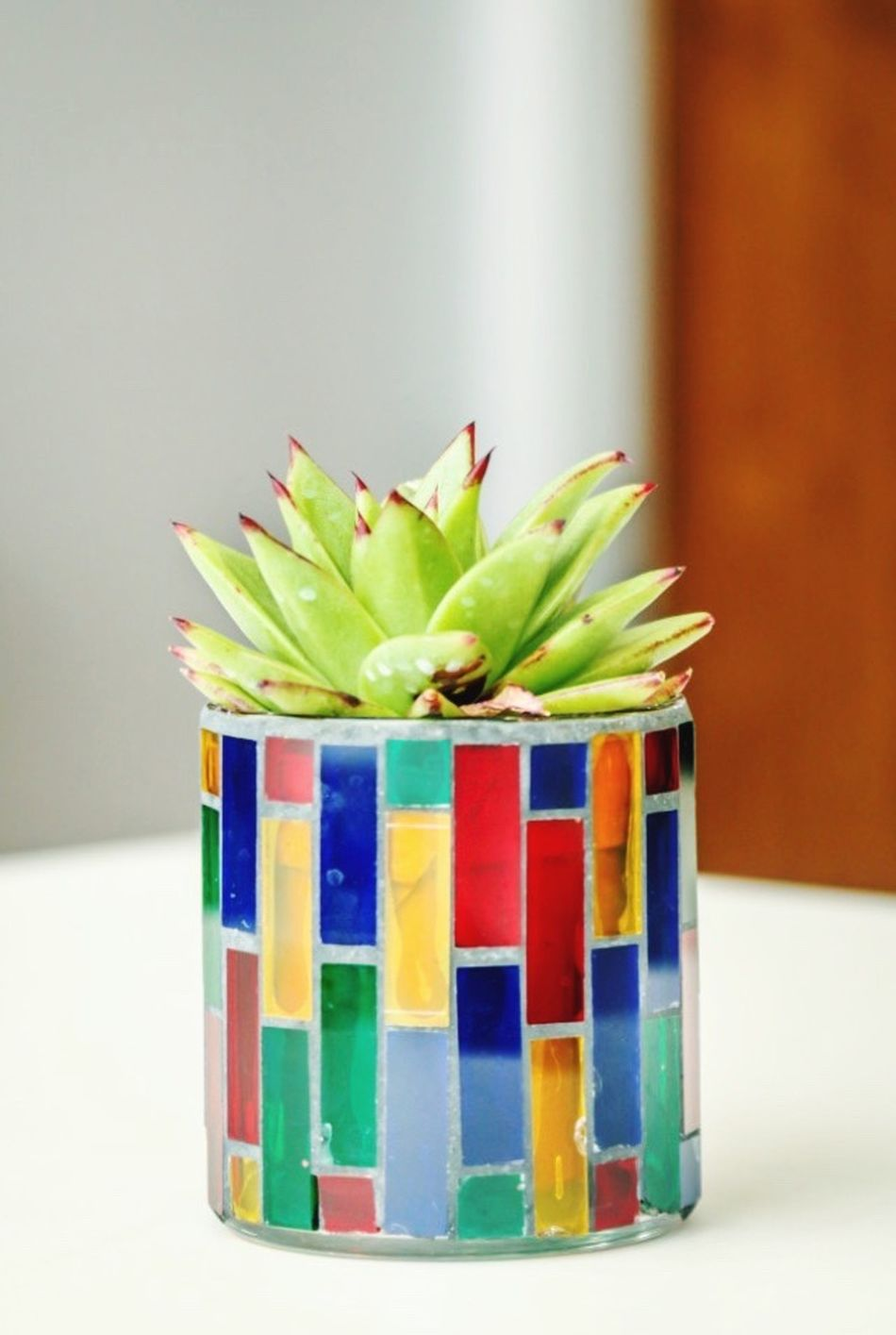 Bright Succulent Pot Plant Green Colorful Multi Colored Indoors  Close-up Table Freshness Flower