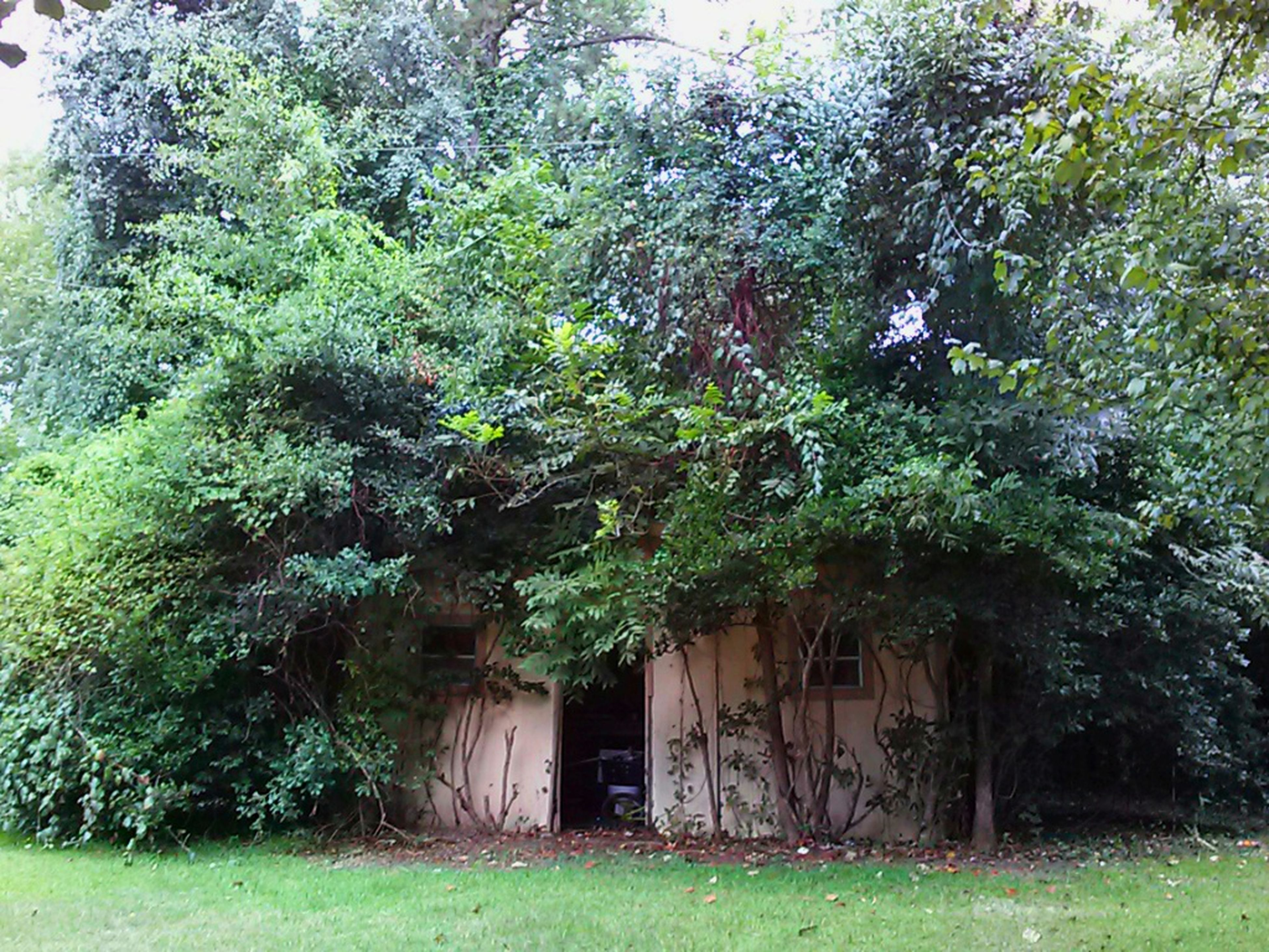 tree, built structure, green color, building exterior, growth, architecture, grass, house, plant, nature, field, day, outdoors, no people, green, tranquility, door, residential structure, ivy, grassy