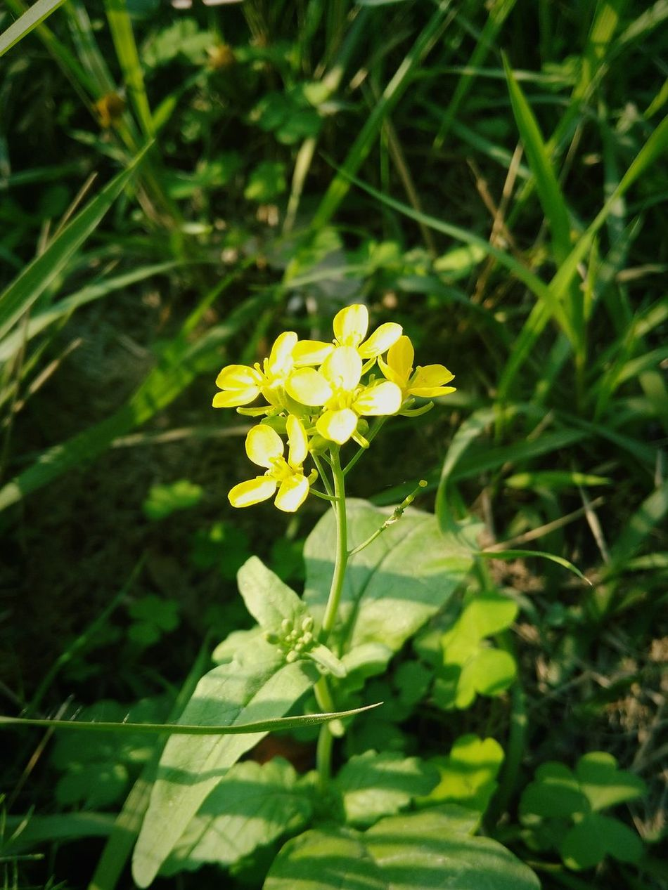 Flower Fragility Nature Growth Beauty In Nature Freshness Yellow Plant Petal Blooming Flower Head Close-up No People Outdoors Grass Green Color Day