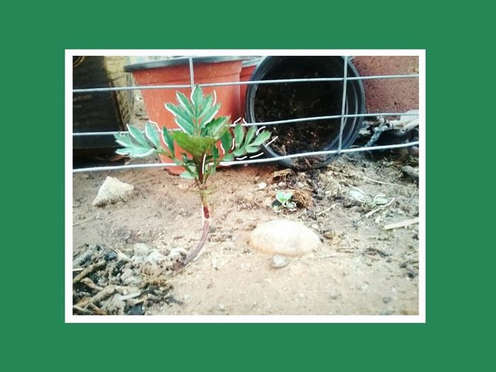 Rebel Sprouts. Thesmallsproutenthusaist Baby Flowers Rogue Garden Garden Photography
