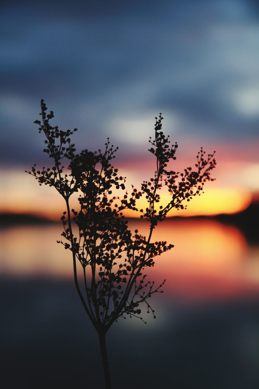 Silhouette Plant By Lake Against Cloudy Sky