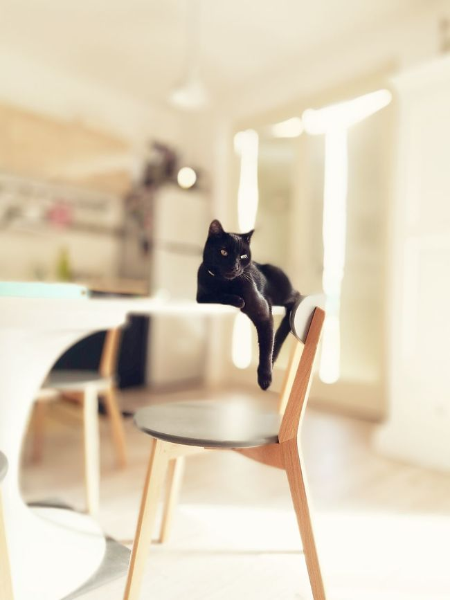 Black Cat Black Cats Lovers Black Cats Are Beautiful Black Cats Focus On Foreground Indoors  Domestic Animals One Animal No People Pets Feline Domestic Cat