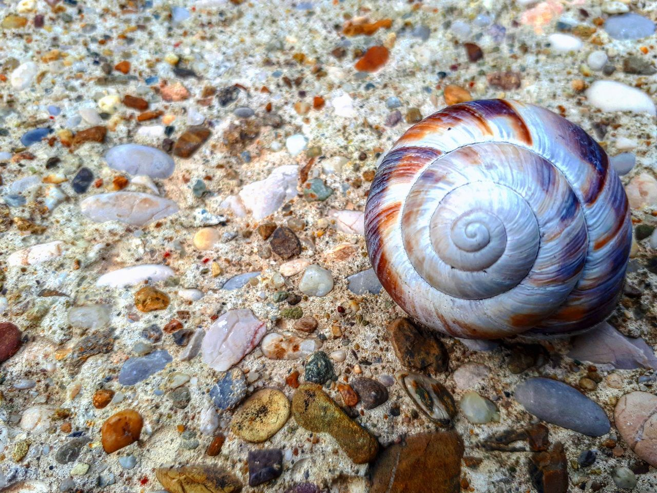 animal shell, snail, animal themes, one animal, animals in the wild, gastropod, wildlife, nature, close-up, day, no people, outdoors, seashell, beach, sea life, sand, sea, fragility, beauty in nature