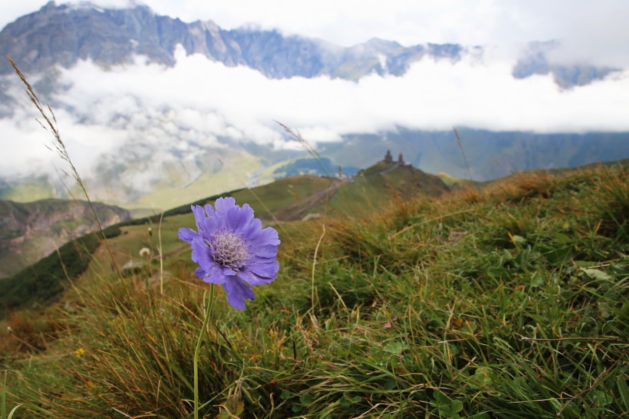 Beauty In Nature Close-up Day Flower Flower Head Fragility Freshness Grass Growth Horizontal Mountain Nature No People Outdoors Plant Purple Sky Wildflower