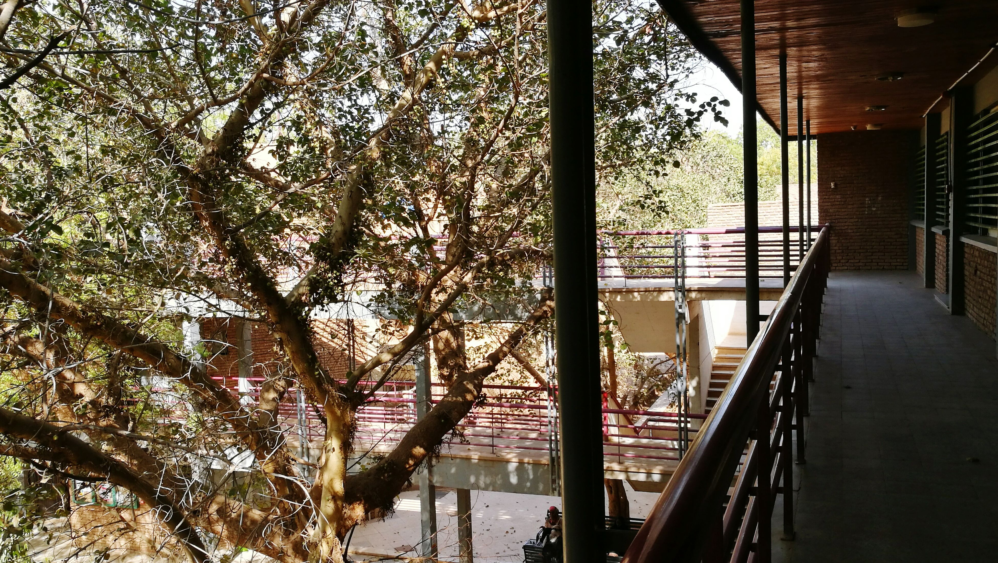 tree, railing, built structure, no people, indoors, day, architecture, nature