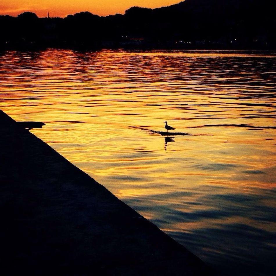 *Lonelybird *Bird is singing alone * Bird is stands alone. (Yalnız kuş,yalnız ötüyor yalnız başına duruyor bu kuş.. )