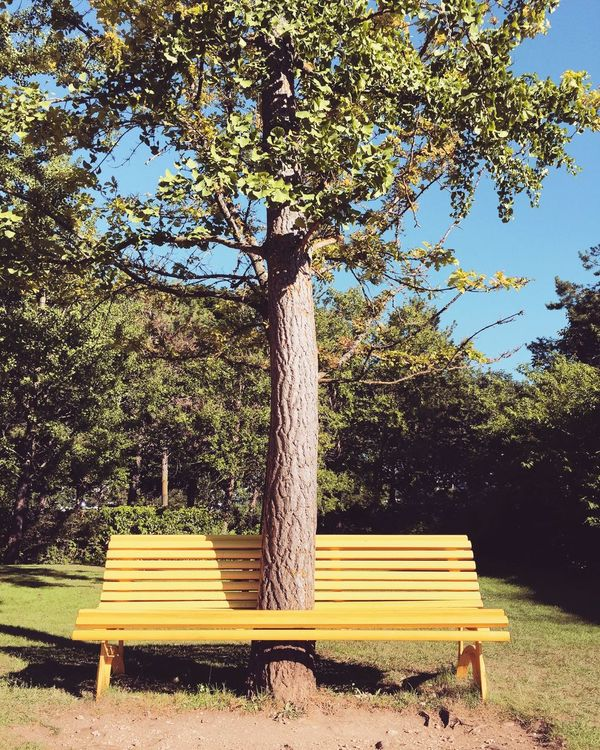 Open Edit Yellow Bench Tree Getting Creative Nature Funny Showcase July The Magic Mission TakeoverContrast Modernism Invading Nature Adapted To The City