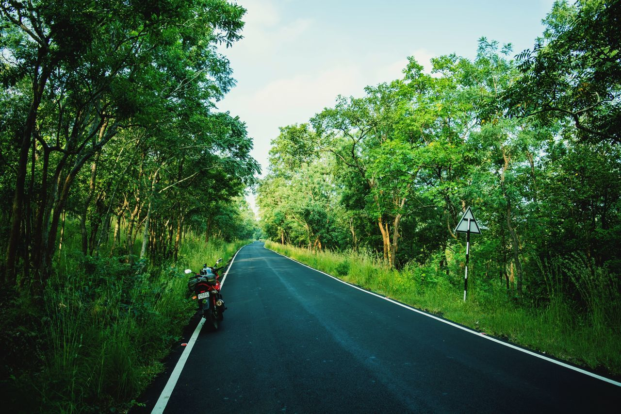 tree, road, transportation, the way forward, nature, outdoors, day, growth, journey, sky, adventure, real people