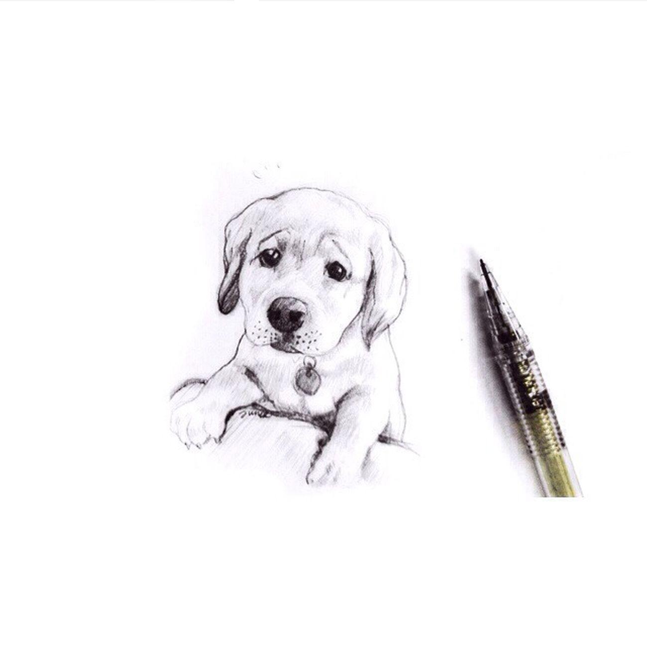 Sketch Drawing