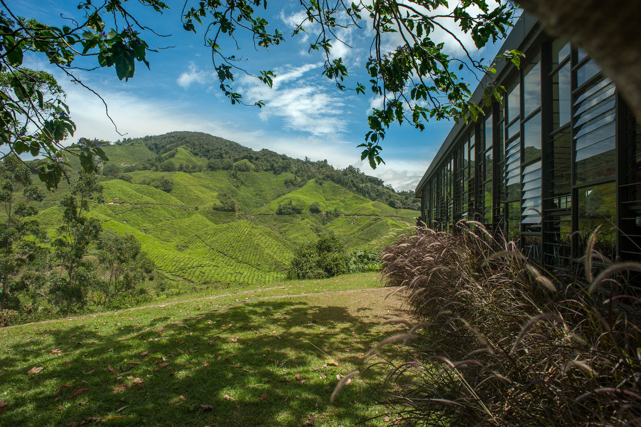 Tea plantation Architecture ASIA Beauty In Nature Built Structure Cloud - Sky Cozy Place Cozytime Day Field Grass Green Color Growth House Nature No People Outdoors Plant Plantation Sky Tea Tea Garden Tea Plantation  Travel Travel Destinations Tree