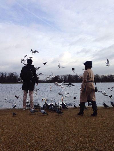 The Tourist Selfie ✌ Selfies London Park Kensington Gardens Feeding The Birds Wildlife Birds Pond Roundpond Visiting Winter February