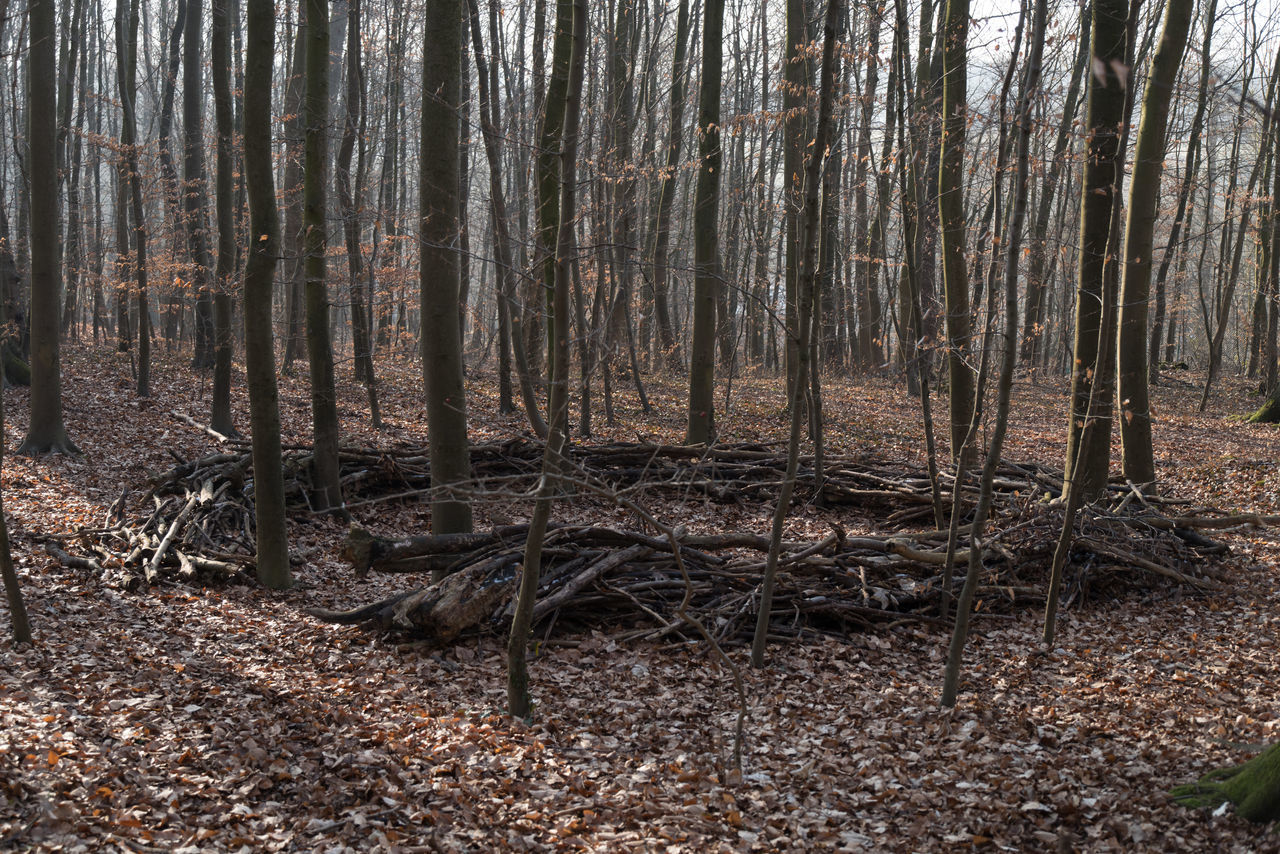 Scouts' assembling point Bare Tree Bare Trees Day Forest Forest Photography Man Made Object No People Outdoors Ring Of Wood Tree Winter Wintertime Wood - Material The Secret Spaces