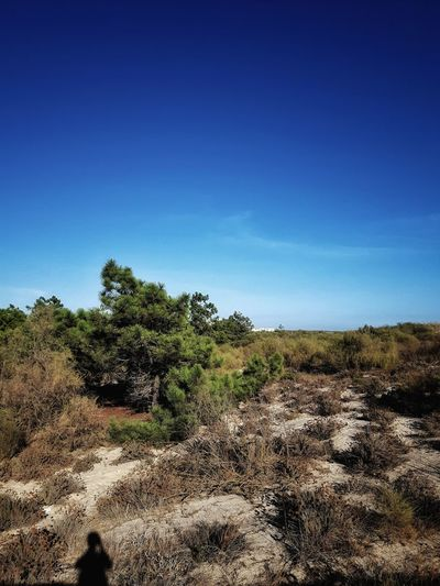 Blue Tree Nature Clear Sky Sky Tranquility Beauty In Nature Sunlight Outdoors Scenics Green Day Shadow Instagramer Umeugram Portugal