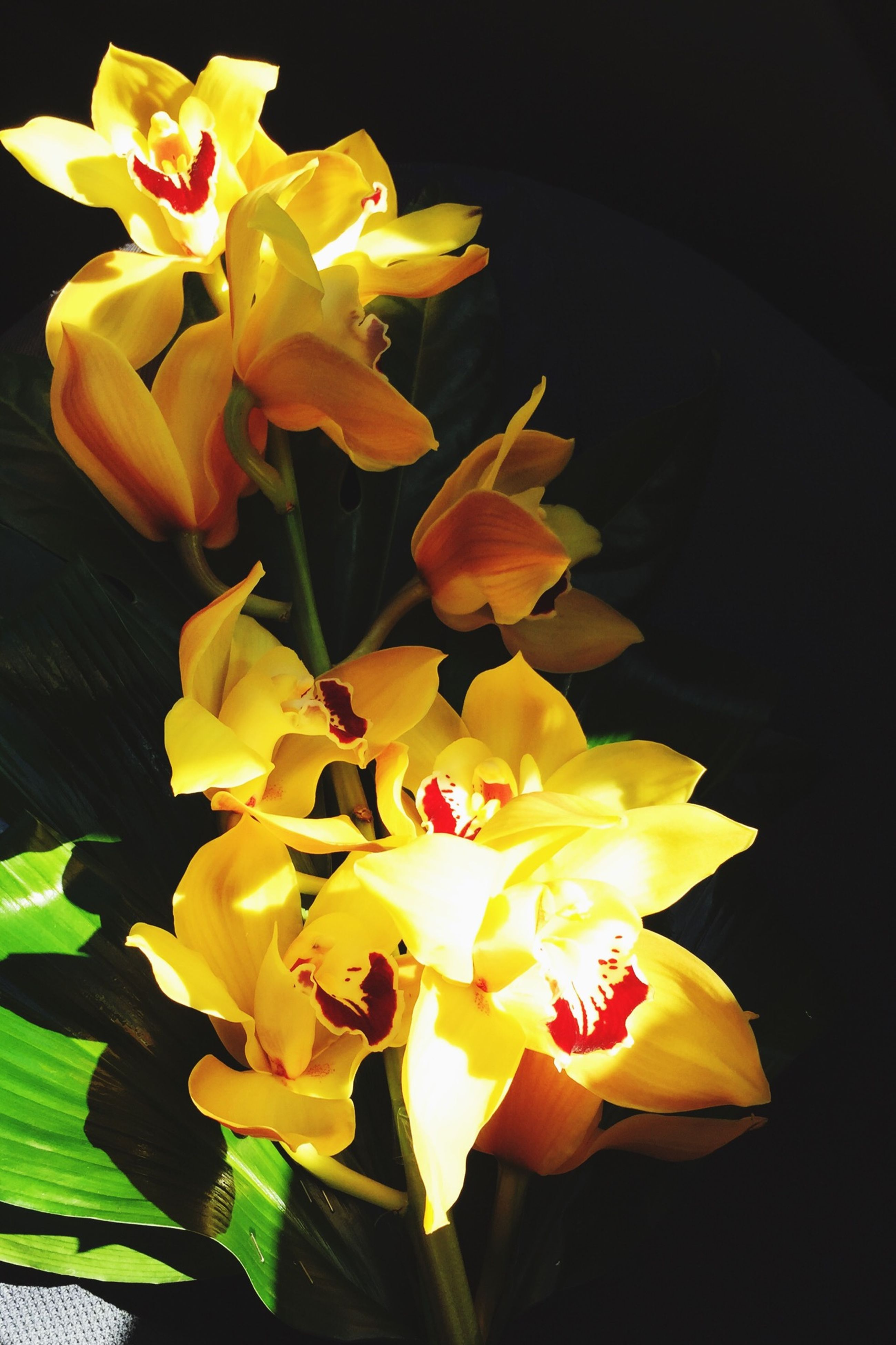 flower, petal, flower head, fragility, freshness, yellow, beauty in nature, growth, close-up, blooming, plant, nature, leaf, in bloom, blossom, stem, no people, focus on foreground, tulip, rose - flower