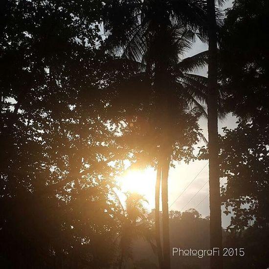 Sunset at Hukurila... Sunset Palmtrees Palm Nature Nofilter PhonePhotography Photografi Shoot2kill Shoot Barondaambon Ambon Maluku  AmbonIsland Ambonmanise WorldCity Travel Travellers Travelgram Worldcaptures Gottaloveit Streetdreamsmag Planettravellers