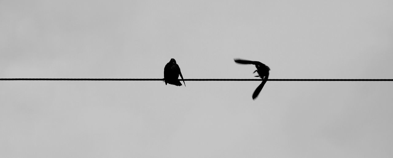 Don't leave me alone Bird Animals In The Wild Animal Themes Low Angle View Clear Sky Cable Animal Wildlife Outdoors Nature Unique Perspectives Uniqueness Canon_photos Canonphotography Canon7d  Facetype Studio Blackandwhite City Beauty In Nature