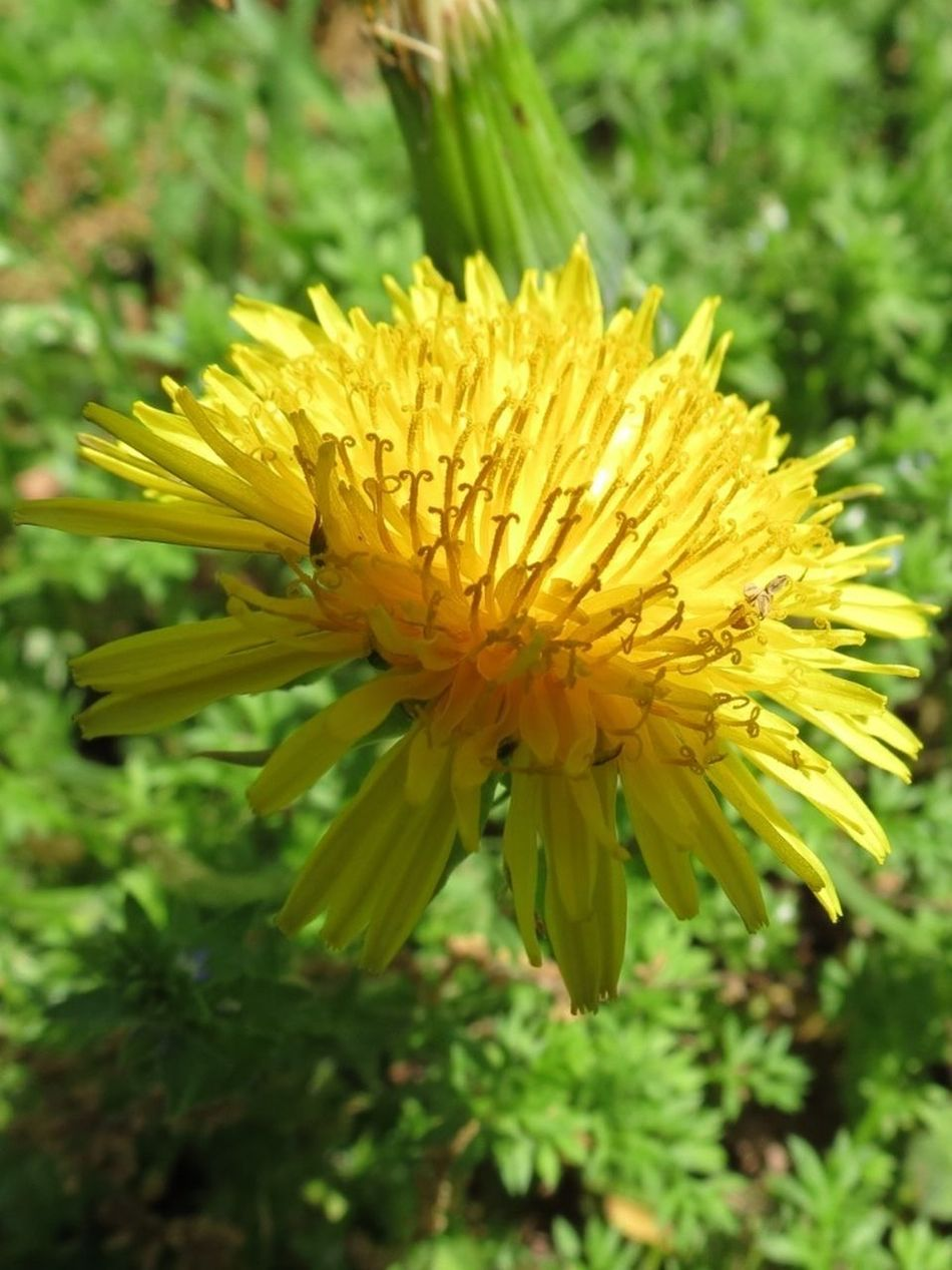 Yellow No Edit/no Filter Wildflower I Love Nature!