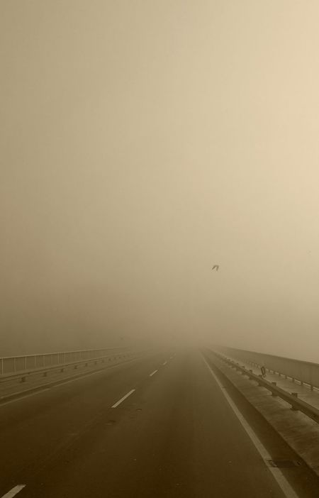 Fogy Foggy Morning Fog Roadtrip Roadside Road Relaxing Bird Lonely Bird Silence Landscapes With WhiteWall