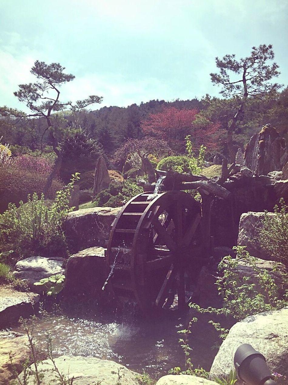가평 아침고요 수목원. 물레방아 No People 물레방아 가평 가볼만한곳 아침고요수목원 (The Garden Of Morning Calm) 드라이브 꽃 꽃스타그램 꽃구경 꽃스타그램🌸 테마공원 Blossom Sakura 벚꽃 Spring Flowers 이쁨 아름다움 Beautiful Daily Life 데이트 관광 Arboretum 추천합니다 좋아요 👍👍👍👍👍👍👍👍