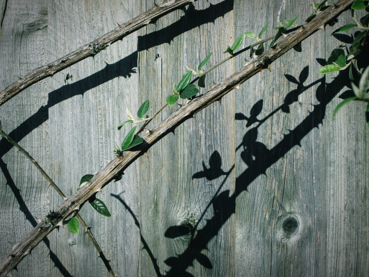 """""""two's company"""" Outdoors Day Shadow Sunlight Close-up Textured  Wood - Material Pattern No People Built Structure Tree Nature Architecture Abstract Fences & Beyond Fences Double Trouble Autism Awareness Creative Light And Shadow Shadows Textured  TCPM"""