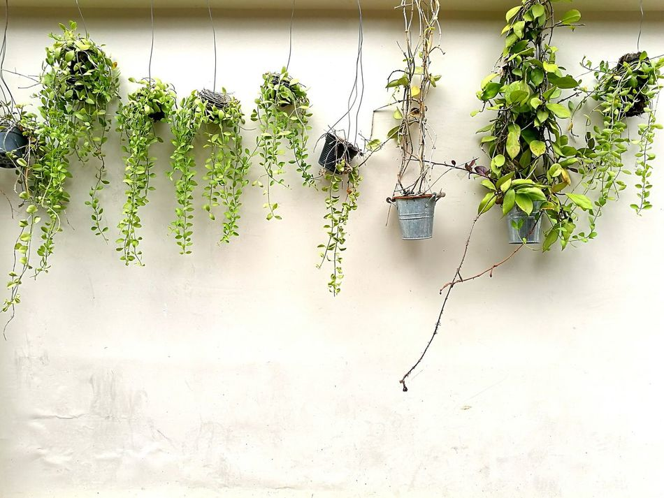Nature Go Green Plants Plants On The Wall Growth Outdoors Best EyeEm Shot Enjoying Life