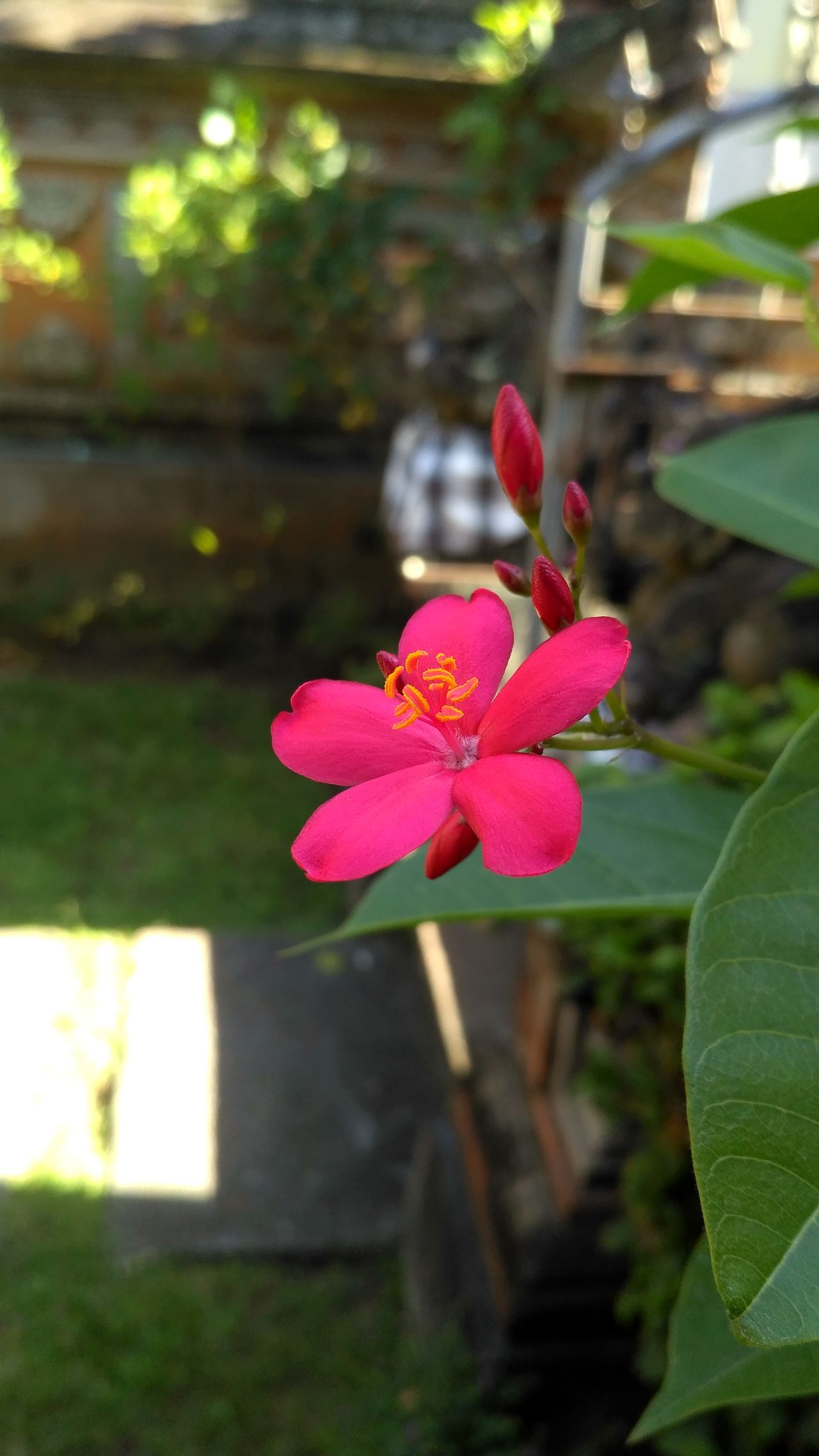 Beauty Flower Ubud