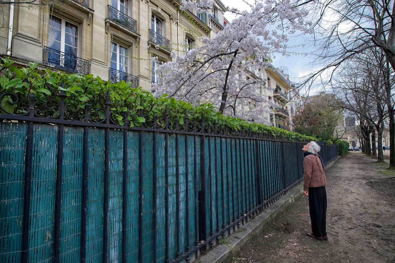 Nikon D4, Nikkor 14 -24 mm 2,8f 2013 Journey Cherry Blossoms Color Eurpo Kirschblüten  Paris Poetic Printemps Streetphotography