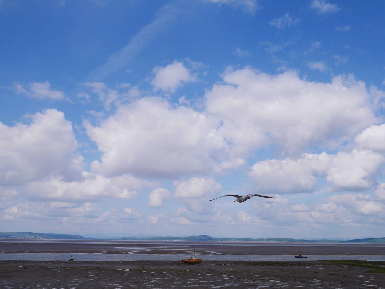 Seagull over Morecambe Bay Animals Sea And Sky