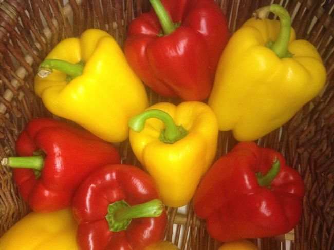 Paprika Food And Drink Freshness Red Yellow Food Vibrant Color Bell Pepper Yellow Bell Pepper Healthy Eating Red Bell Pepper Close-up Pepper - Vegetable Multi Colored Vegetable