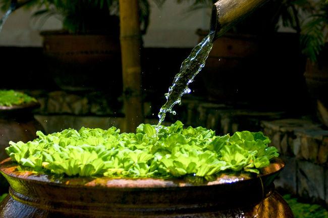 Entspannung Bambus Bambusrohr Brunnen Krug Pflanzen Tonkrug Wasser Wasserstrahl