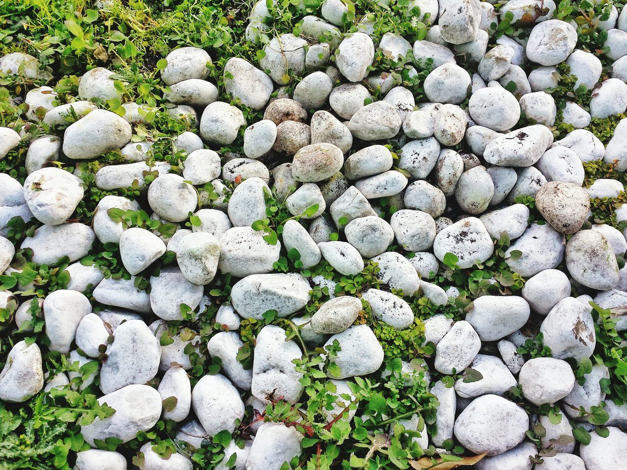Stone Rocks Pebbles Garden Floral Beauty In Nature Growth Green Color Nature No People Close-up Backgrounds Outdoors Stone Pavement Rocks And Grass Closeup In Nature Closeup Photography No People. Beauty In Nature Diamond Pattern