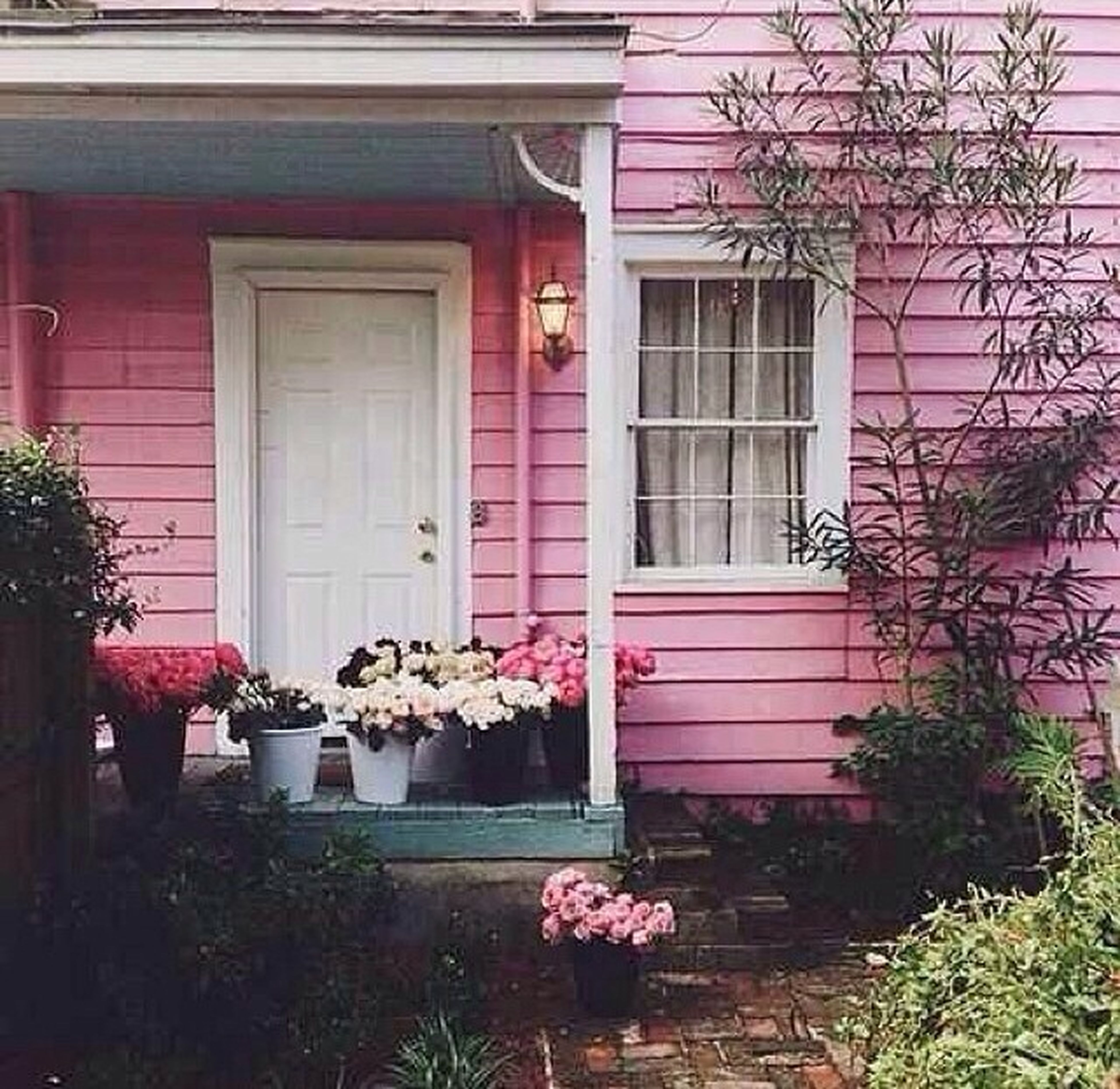 flower, building exterior, architecture, built structure, plant, window, house, growth, potted plant, front or back yard, fragility, residential structure, freshness, flower pot, nature, petal, day, door, blooming, pink color