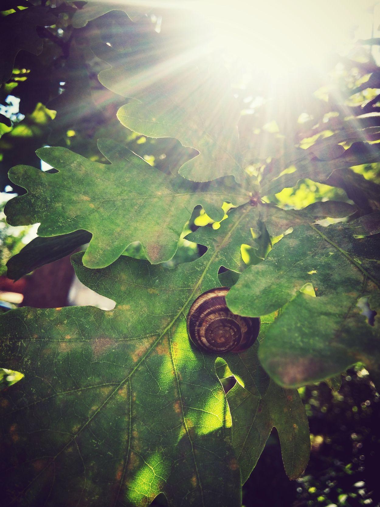 Pray Afterlife Shelter Sleep Eternal Sleep Snail Leaves Sunshine End Of Life Snailedit Sunbeam Accomplished Death