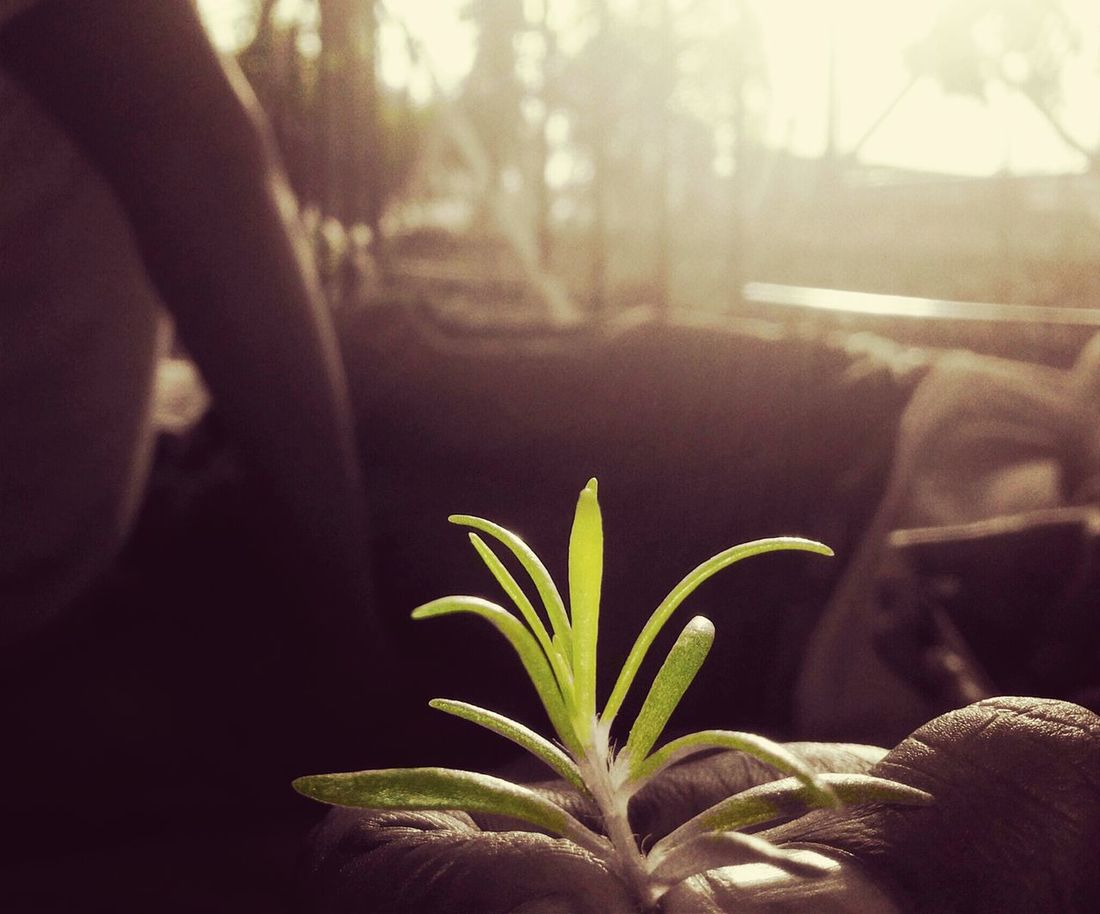 Collected Community: time to 'Plant' something..!