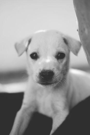 Dog Dogs Blackandwhite Bw