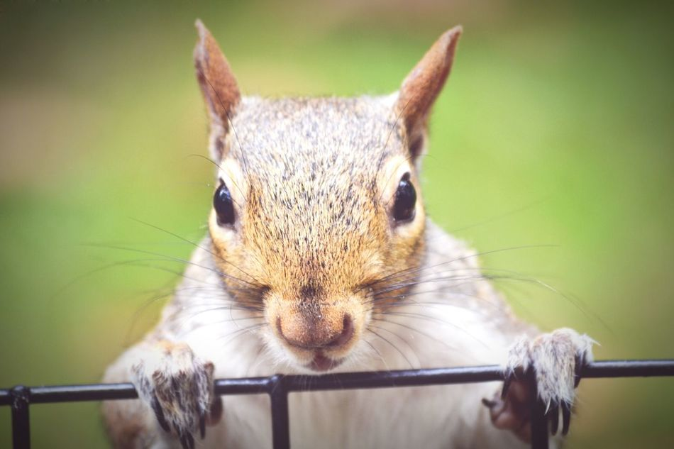 Beautiful stock photos of squirrel, Animal Themes, Animals In The Wild, Close-Up, Focus On Foreground