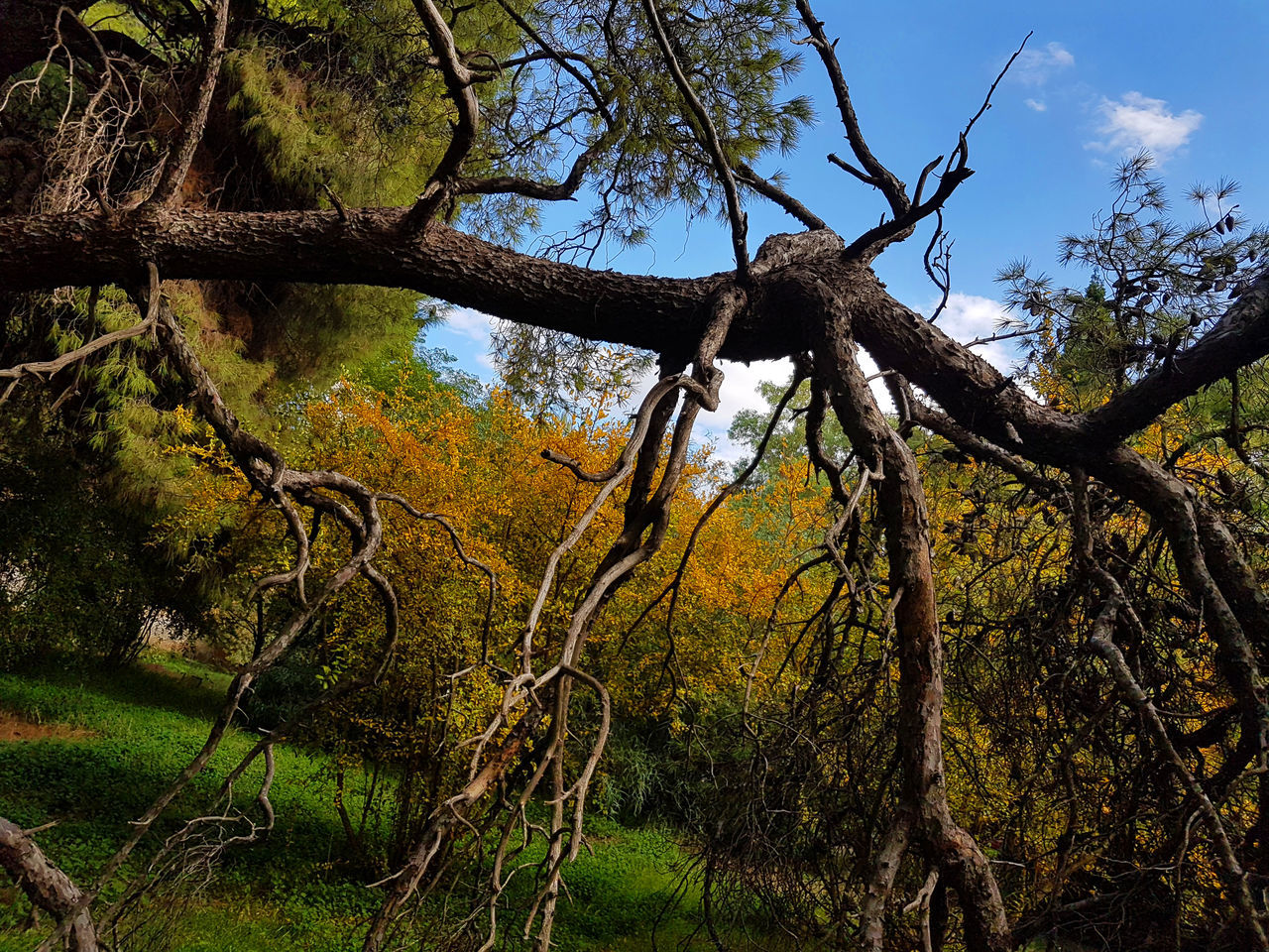 Beauty In Nature Branch Day Forest Low Angle View Nature No People Outdoors Sky Tree Tree Trunk