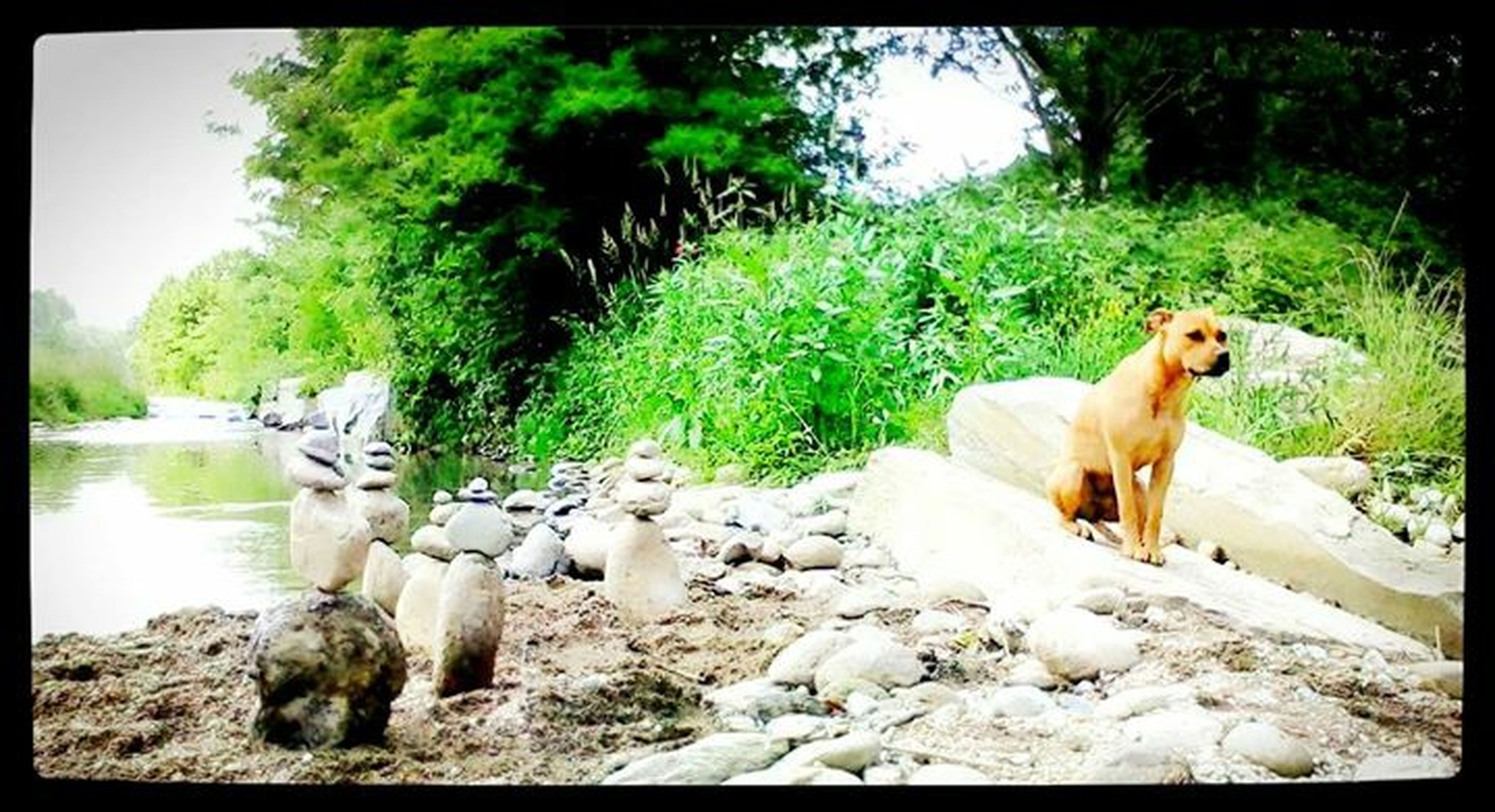 animal themes, domestic animals, mammal, transfer print, tree, pets, auto post production filter, dog, one animal, nature, field, rock - object, day, landscape, sunlight, green color, growth, grass, two animals, outdoors
