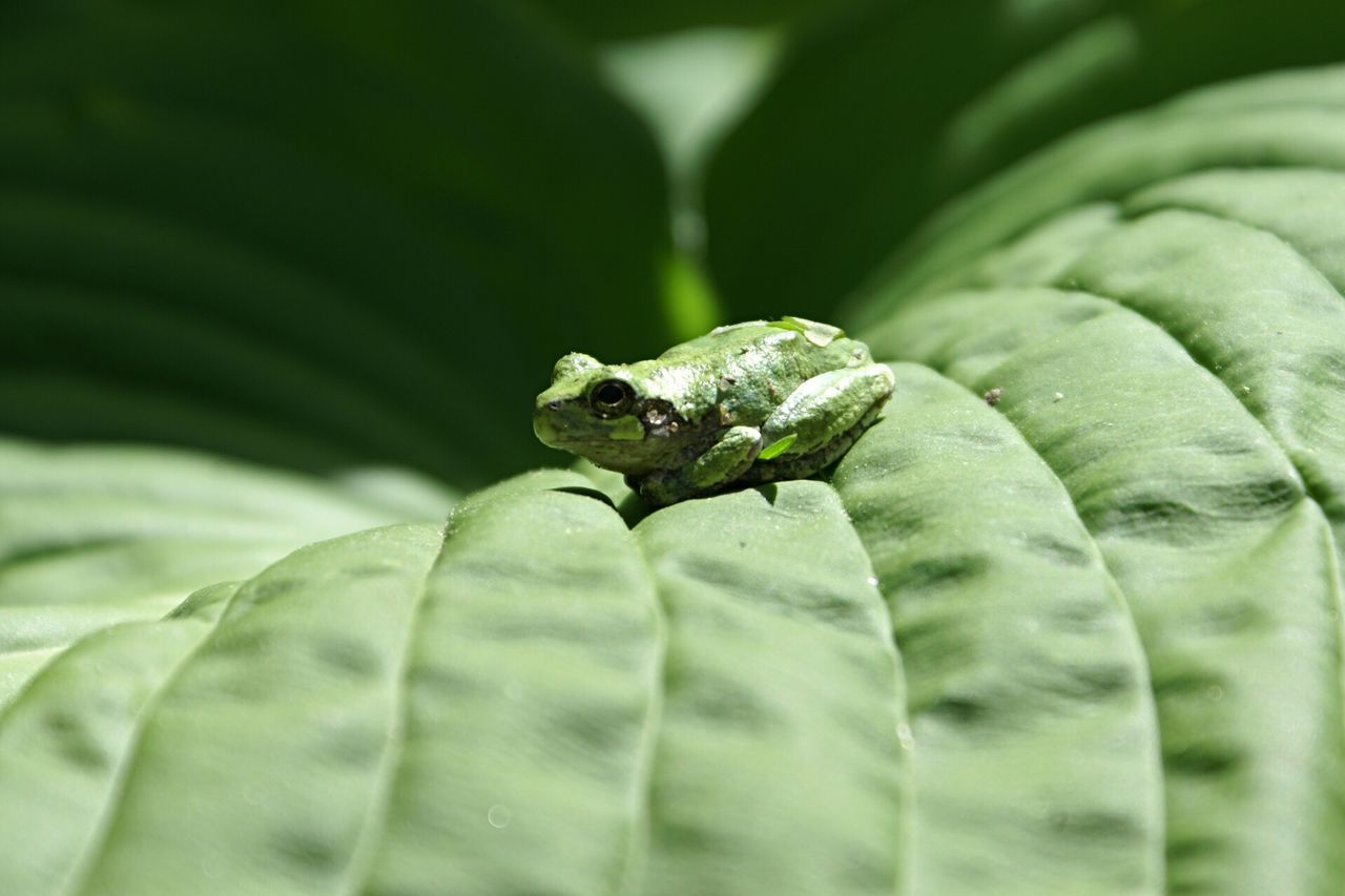 One Animal Animal Themes Animals In The Wild Green Color Animal Wildlife Nature Close-up Frog