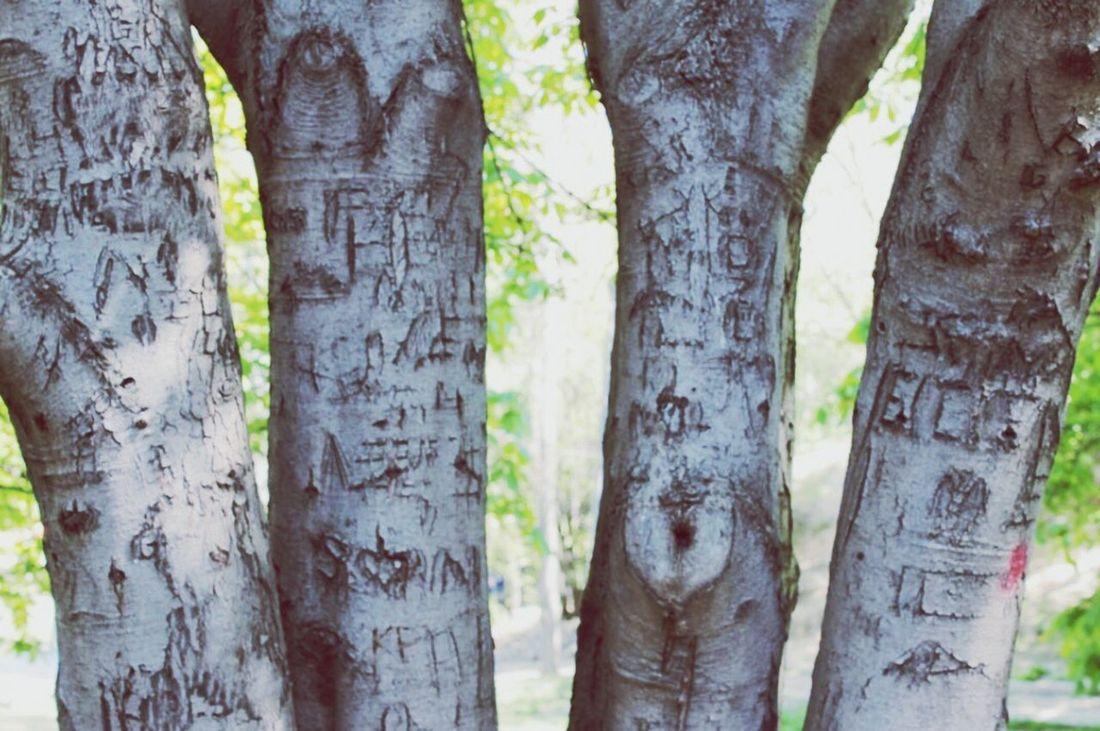 Lovestories Lovestories Tree Segmenler Parki Seğmenler Ankara