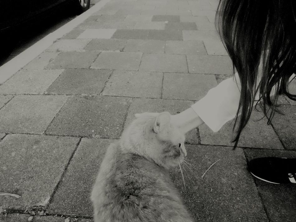 LoveMe Pet Love Petmemeow Cat Streetphotography Animals Humanlife Nature Touching Blackandwhite B&w Street Photography