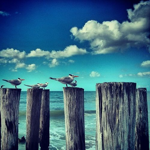 Beachwalk Beachcreatures Floridaclouds Floridainnovember floridabeaches naples swf