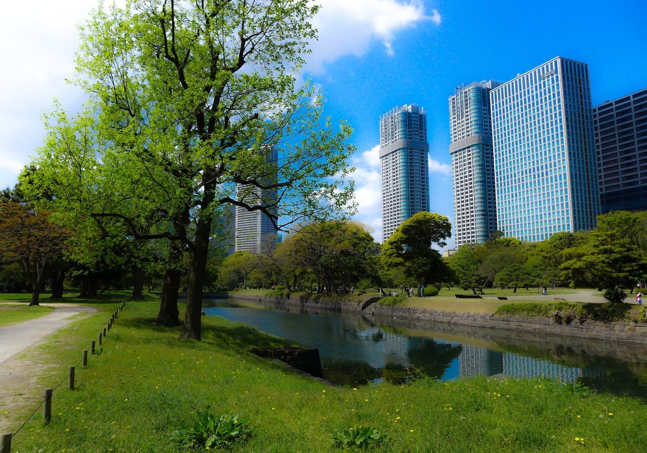 tree, architecture, reflection, skyscraper, built structure, building exterior, water, sky, city, grass, park - man made space, modern, river, green color, outdoors, nature, day, cityscape, growth, no people, beauty in nature