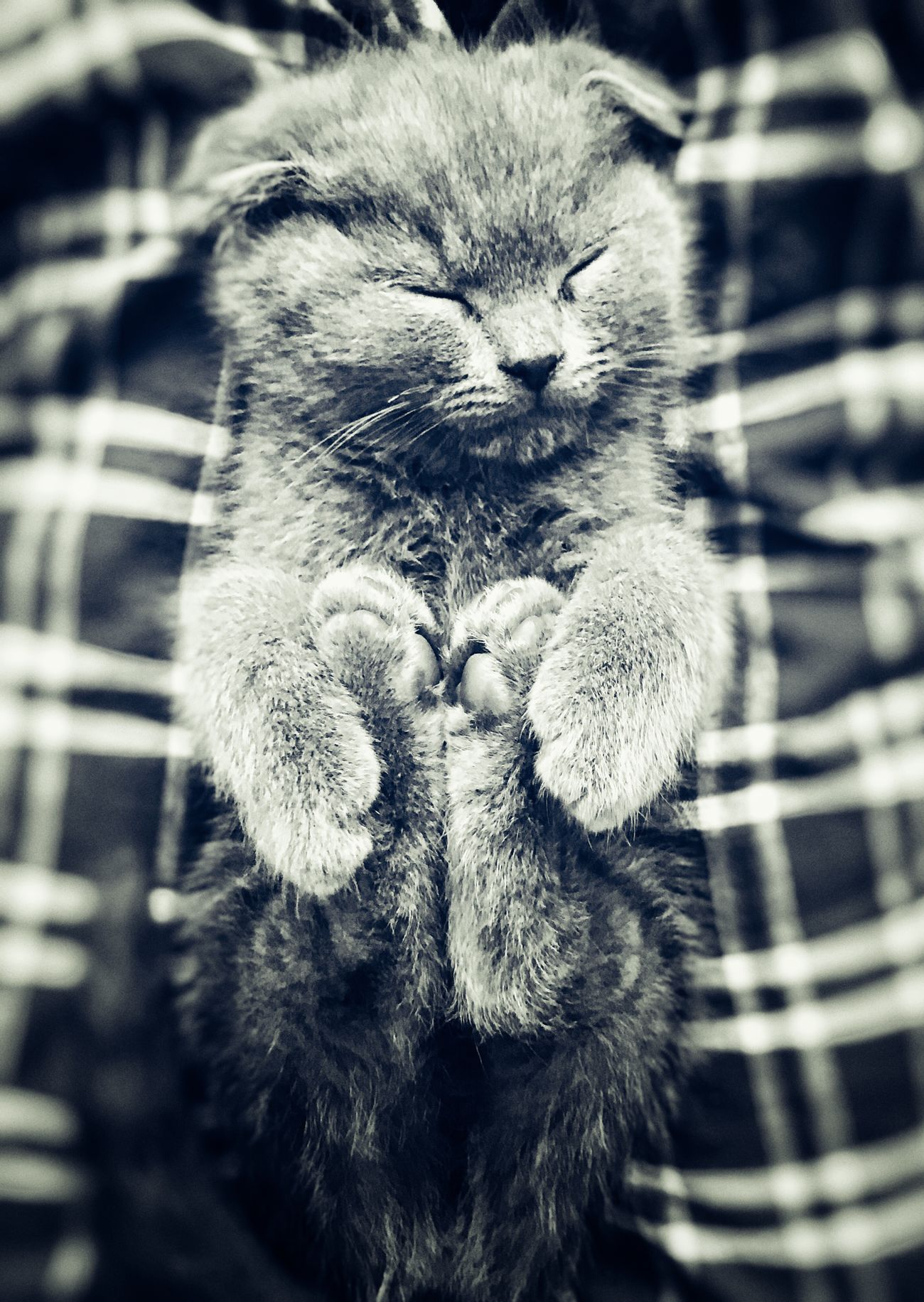 Always Be Cozy Baby Babycat Cat Cats Tired Pet Domestic Animals Focus Sweet