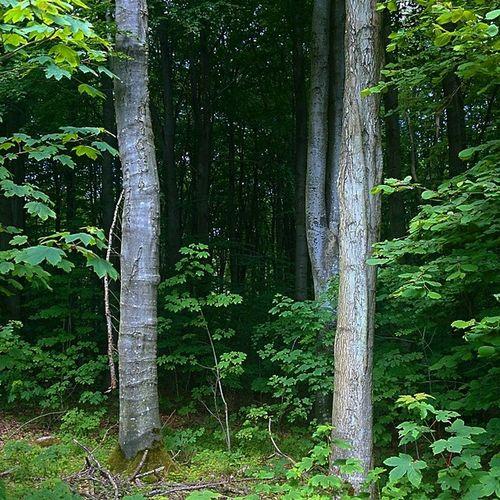 Treer Woods Nature Skov træÅrhus