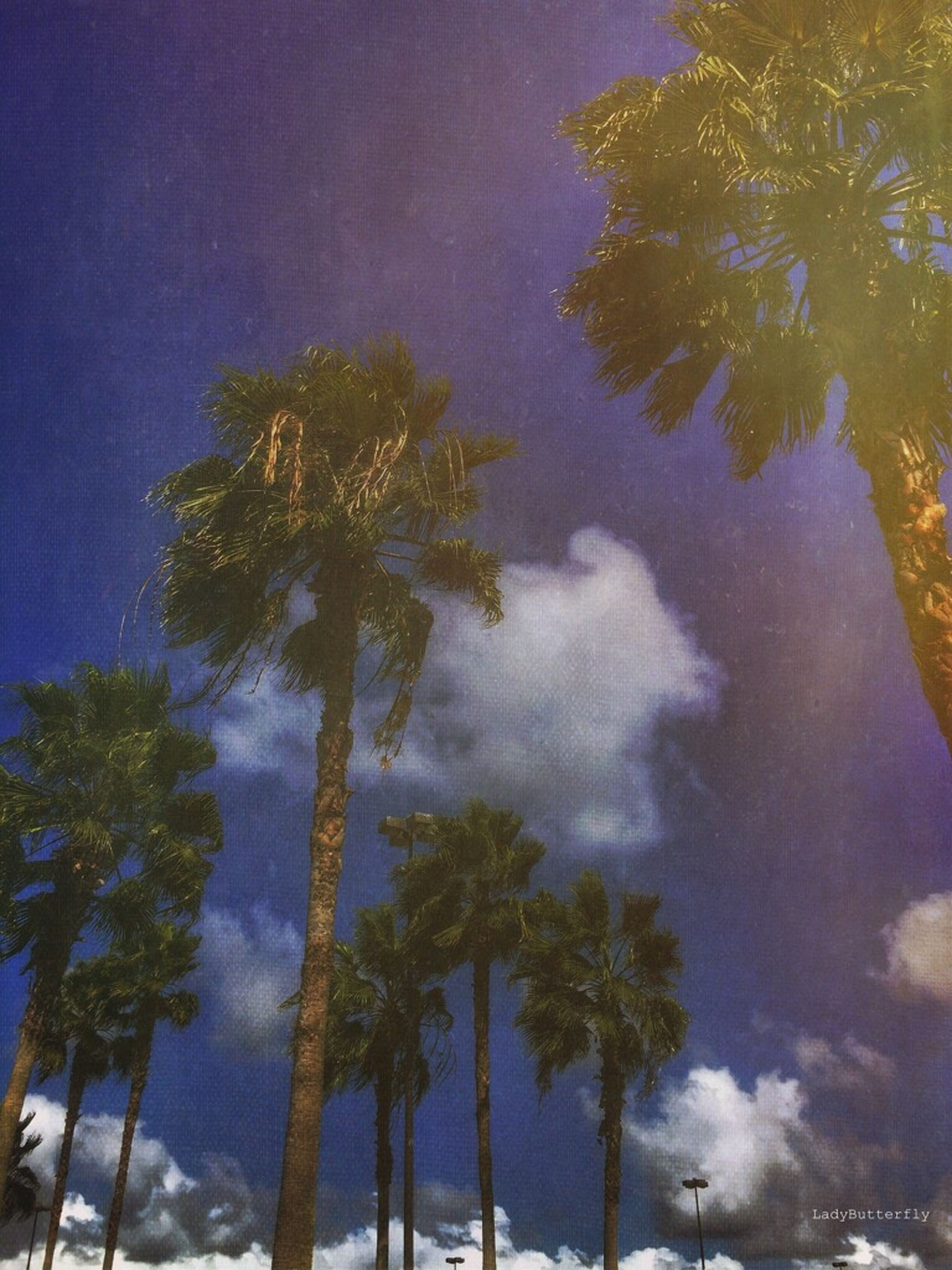 tree, sky, palm tree, beauty in nature, nature, night, no people, low angle view, cloud - sky, milky way, galaxy, tranquility, outdoors, astronomy, scenics, star - space, science