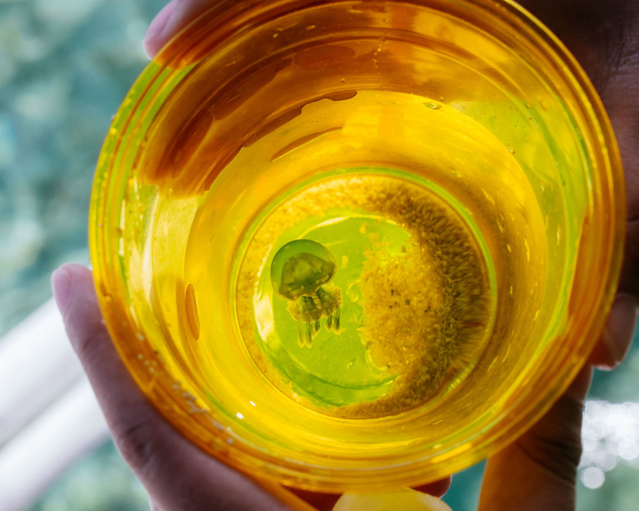A tiny jellyfish inside a translucent plastic cup. Container cup Gold human hand jellyfish personal perspective sea life Tiny yellow