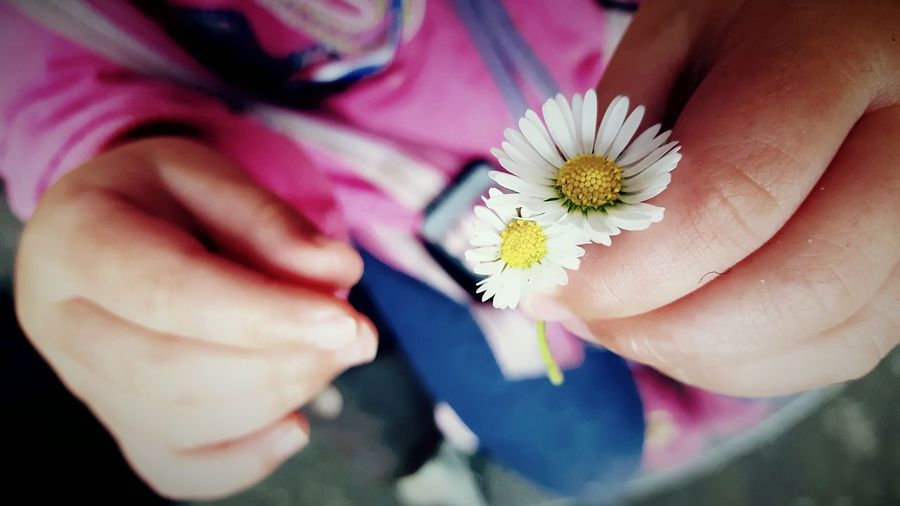 This Is Perspective day 4. Daisies Two Precious Picking Daisies Perspective Little Things Pure Joy The OO Mission