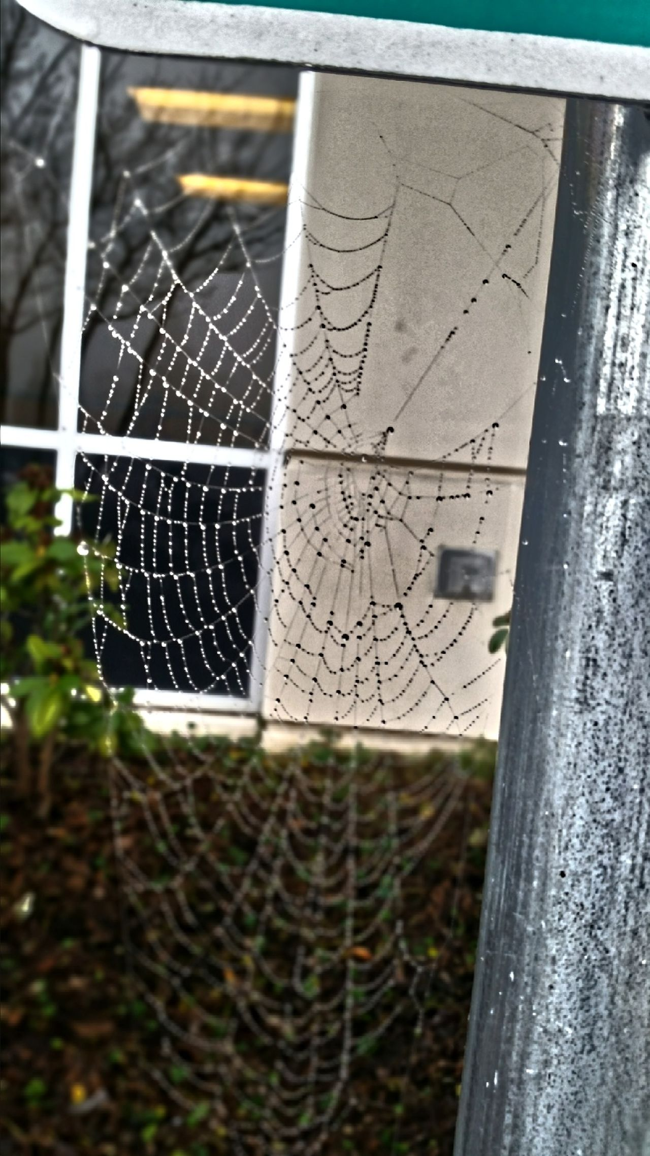 Nature's Diversities Spider Web Spider Web And Rain Spider Web, Dew, Morning, Nature Nature Photography Naturelovers Nature_collection Tranquil Scene