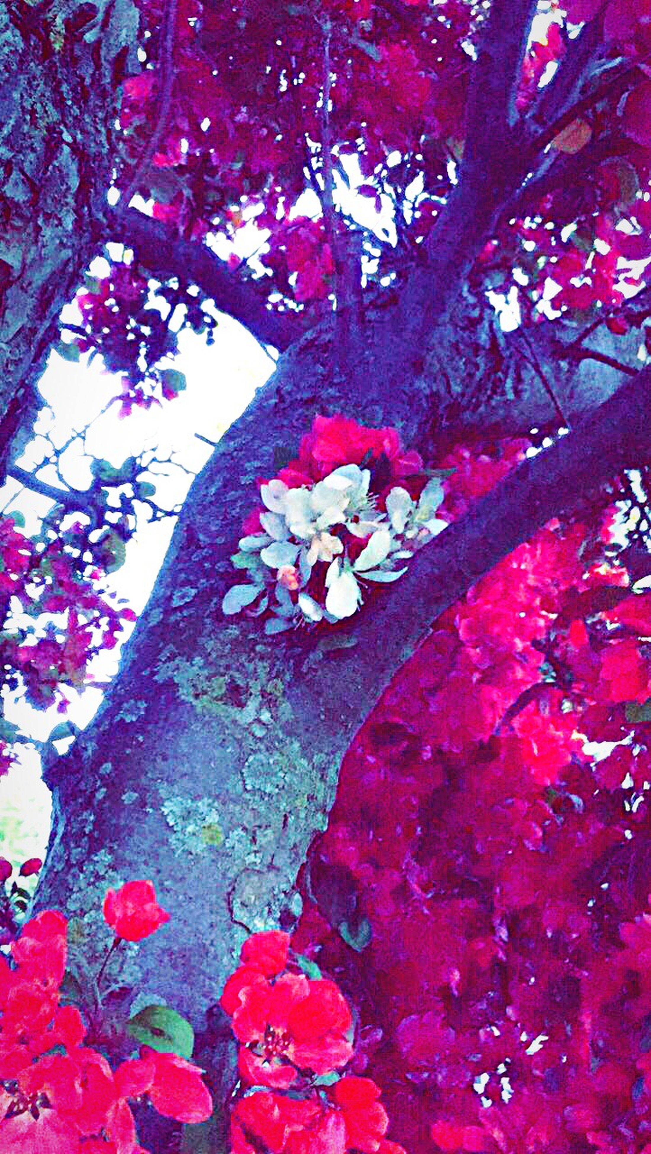 flower, beauty in nature, tree, growth, nature, fragility, petal, blossom, branch, low angle view, no people, freshness, day, springtime, outdoors, close-up, pink color, red, blooming, flower head